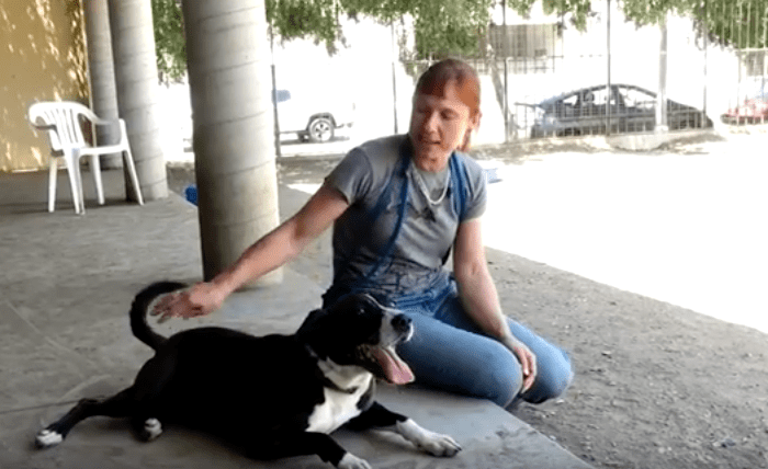 Shelters Making a Difference in the Lives of Stray Animals